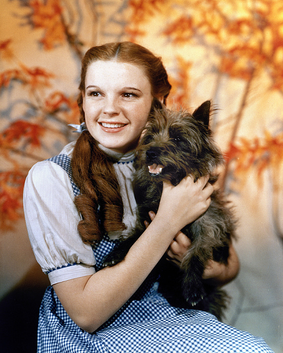 wizard-of-oz-1939-granger